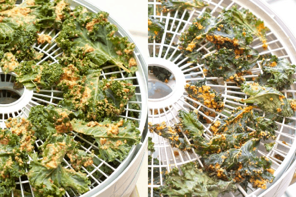 food processor with coated kale and another rack with dehydrated kale.