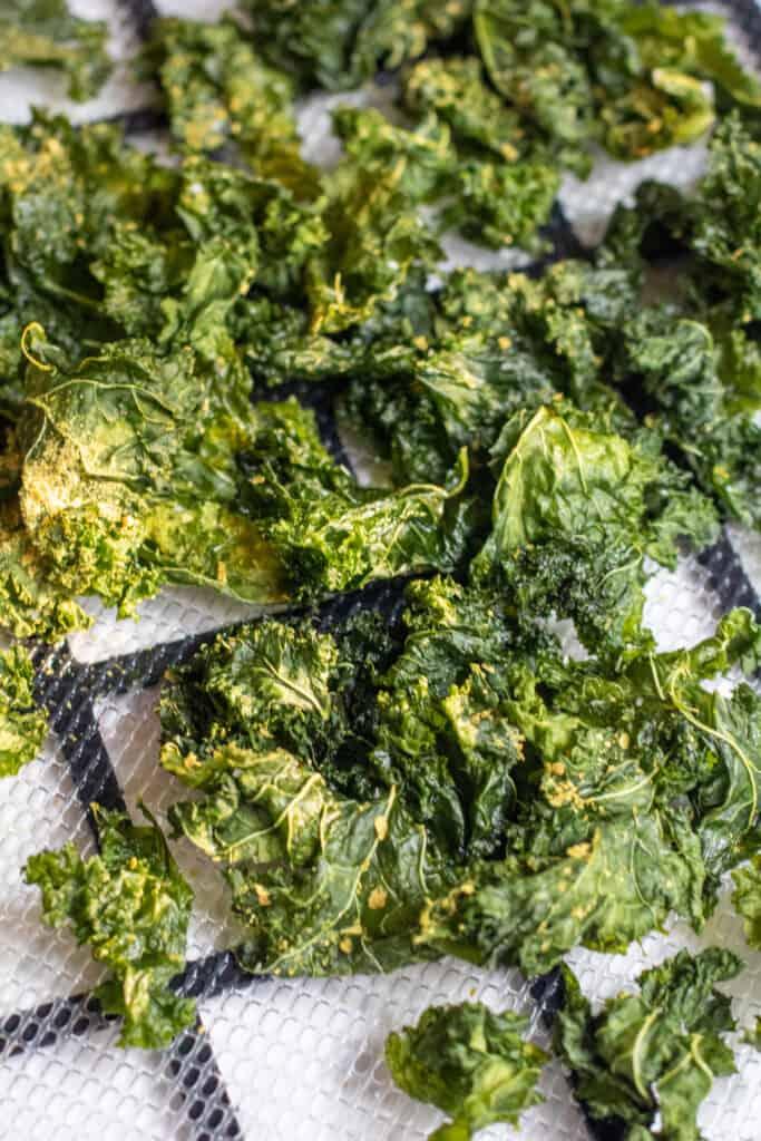 crispy kale chips on a dehydrator tray
